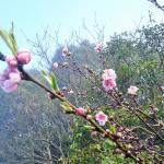 3月3日 桃の節句 『ひな祭り』‼