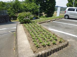 ひまわり園開園記念日⑧