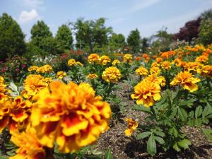 ひまわり園開園記念日⑥