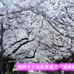 ひまわり会の桜前線は今