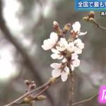 桜開花宣言続々と! 施設の桜はもう少し